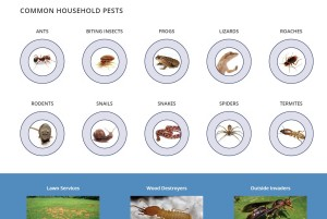 Household Pest Section